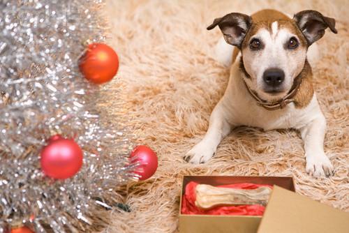 Merry krisimasi dear Shirin :*
