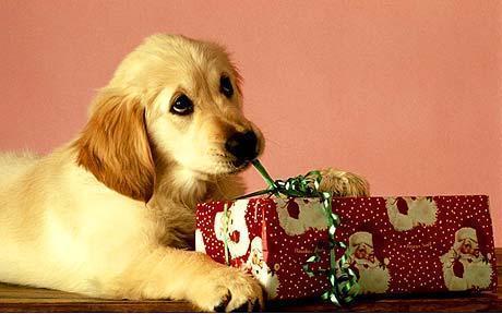 Merry Christmas dear Shirin :*