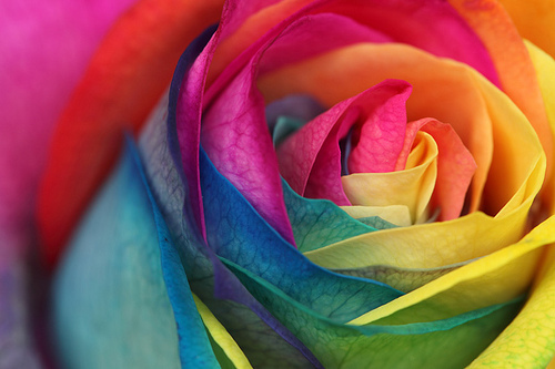 rainbows wallpaper containing a rose, a rose, and a camellia entitled rainbow stuff