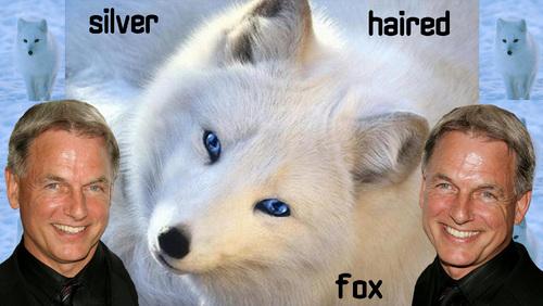 silver haired rubah, fox (english version)