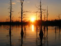 Black Bayou, Monroe, Louisiana - united-states-of-america photo