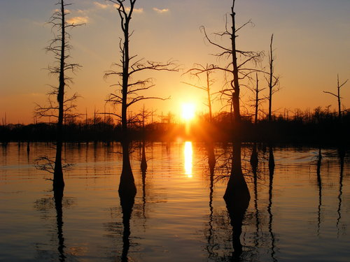 আমেরিকা দেওয়ালপত্র containing a sunset called Black Bayou, Monroe, Louisiana