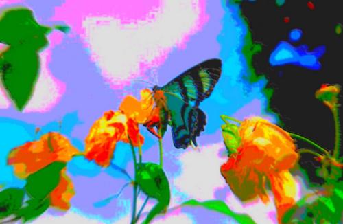 Blue vlinder