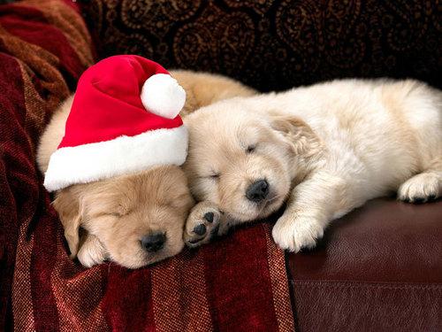 Christmas☆pets!
