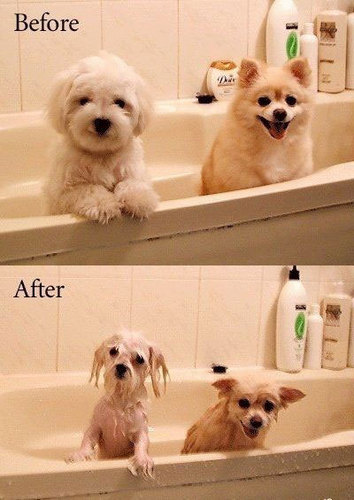 LOL before and after