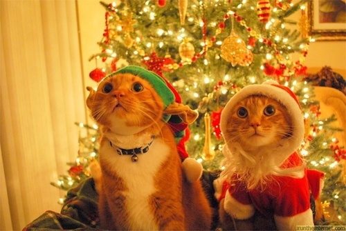 Merry Christmas Dear Shirin <3
