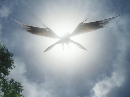 Avatar wallpaper possibly containing a swift and a homing pigeon entitled The last Shadow