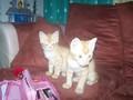 twins cat