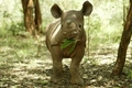 A Cute Black Rhino Calf