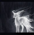 Always - the-silver-doe photo