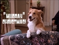 Murray Christmas! - mad-about-you photo