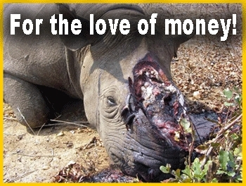 Poached Rhino - For the प्यार of Money! :'(