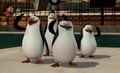 Smile and wave :D - penguins-of-madagascar screencap