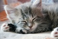 Who could't love us :D - cute-kittens photo