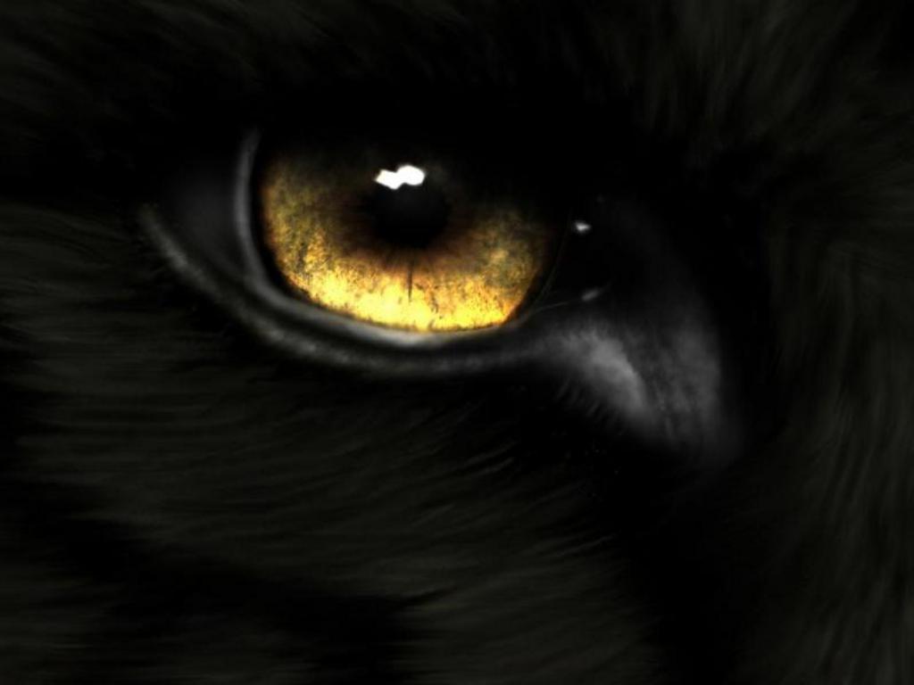 Wolf eyes in dark - photo#6