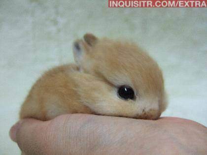 Cutest Bunny Ever Bunnys Photo 17878934 Fanpop