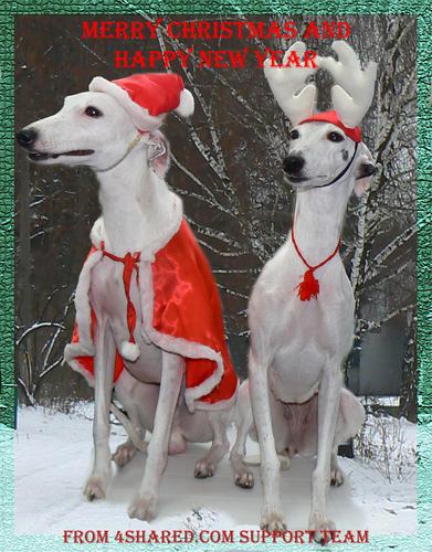 merry Christmas dear Sarah xx