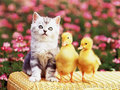 Good friends :) - cute-kittens photo
