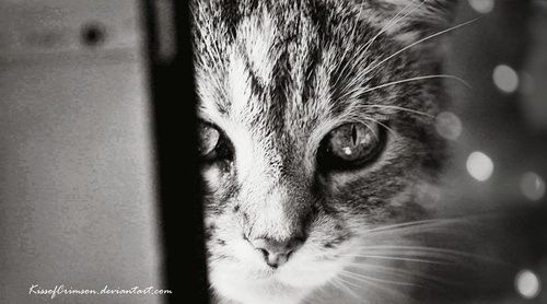 My Fotografi