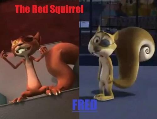 गिलहरी Comparason