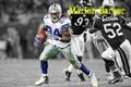 marion barber - nfl photo