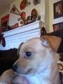my puppie