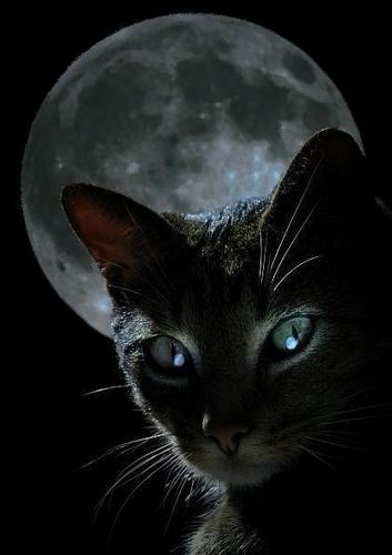 Full Moon Tabby Cat