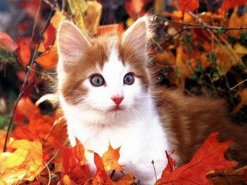 Adorable gatos