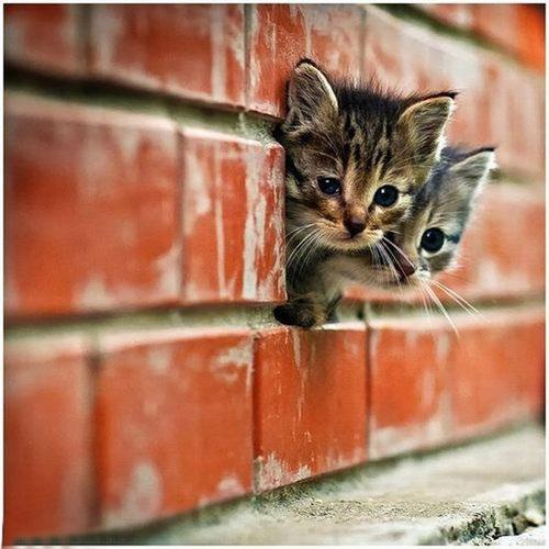 Adorable 子猫