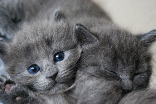 Adorable kitties