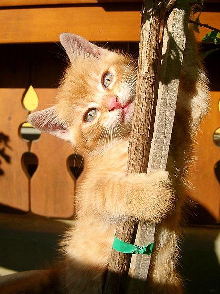 Adorable kitties