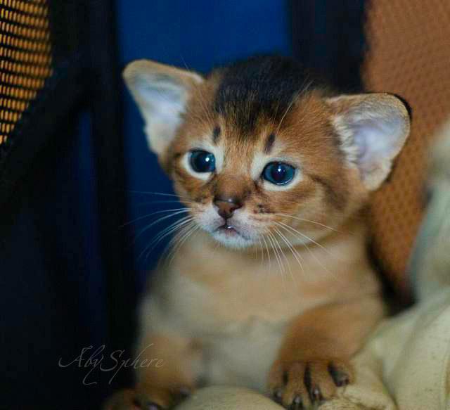 Kitties Kitties