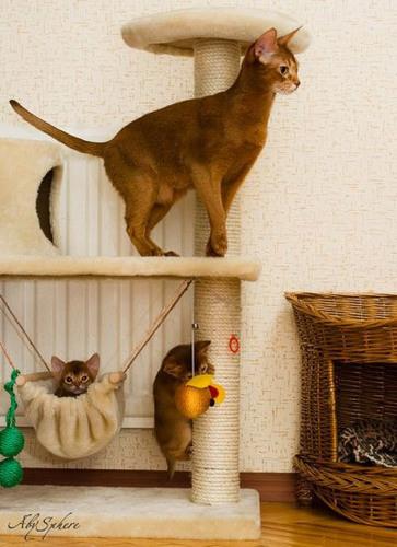 Kitties <3
