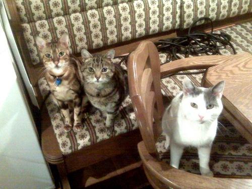 Squiz, Jasper and Colin