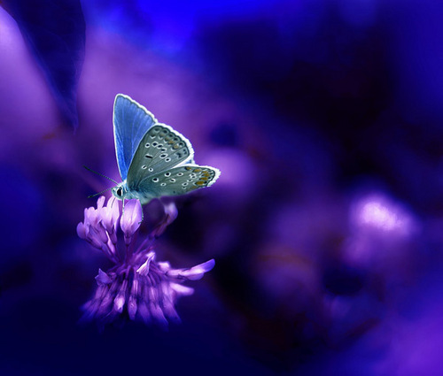 Butterflies wallpaper entitled Beautiful Butterfly