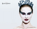 Black Swan - black-swan wallpaper