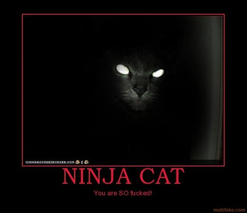 Cats are ninjas