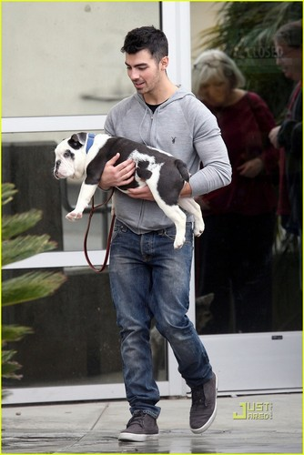 Joe Jonas: Winston Goes to the Vet (02/01/2011)!