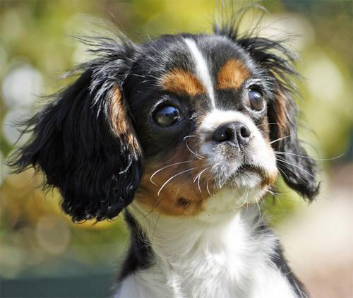 Lovely Hunde