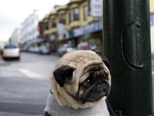 Lovely कुत्ता