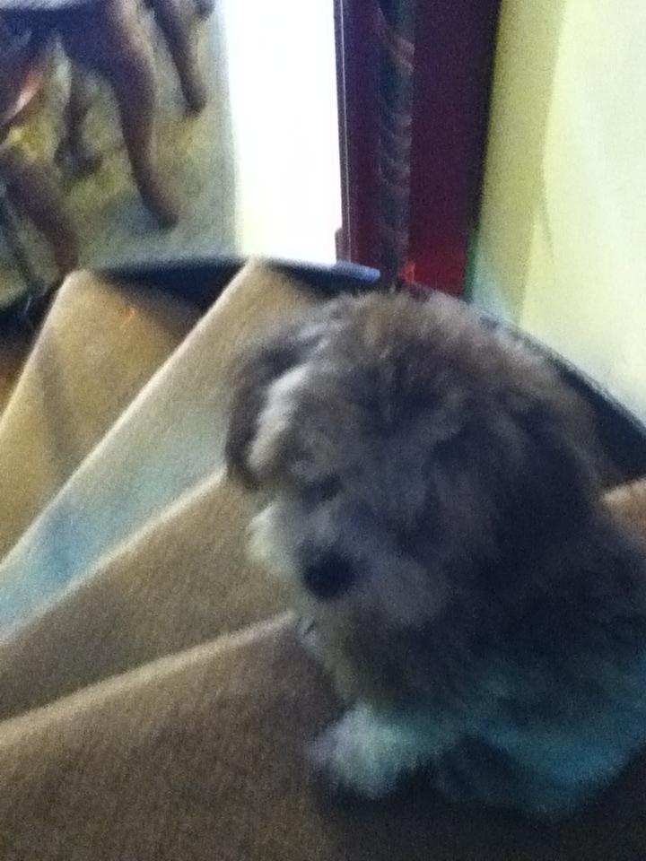 MY DOG NAMED BELLA