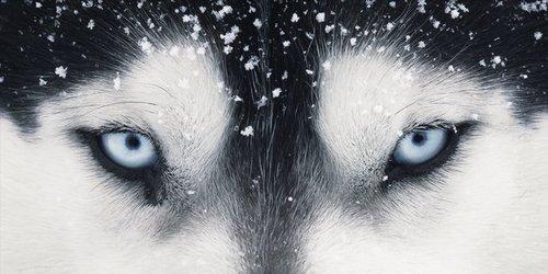 huskies(:
