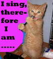 singing cat - stay-cation photo