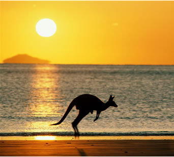 Australia 바탕화면 containing a kangaroo, a wallaby, and a giant 캥거루 titled Australian sunset