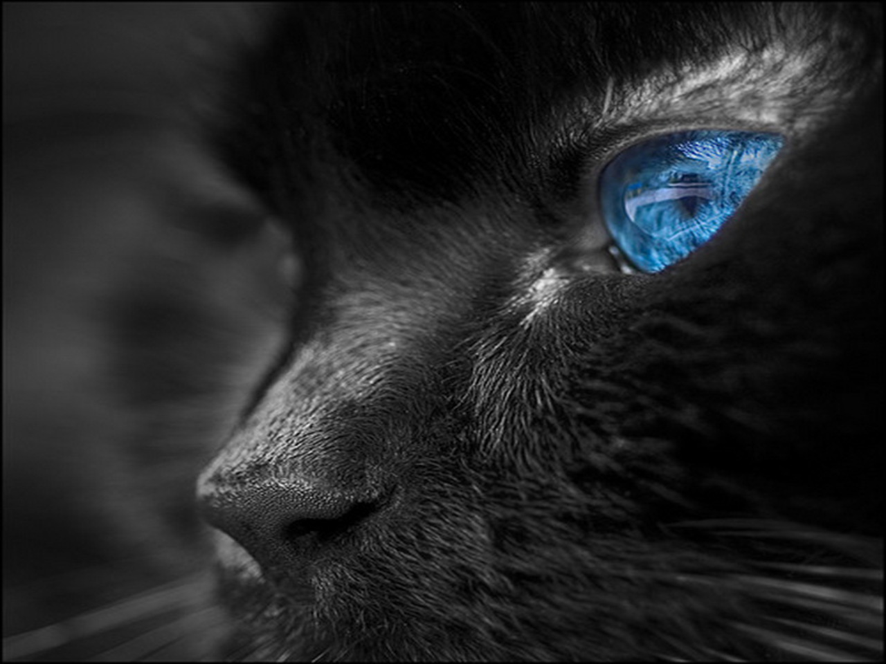 bright colors images blue eyes hd wallpaper and background photos
