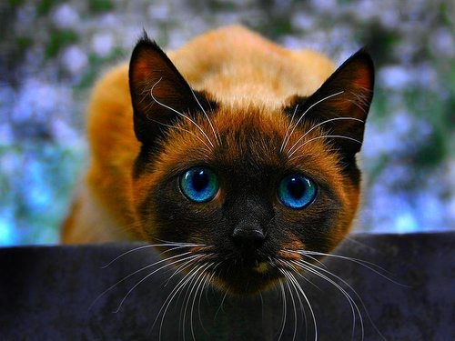 Blue Eyes - bright-colors Wallpaper