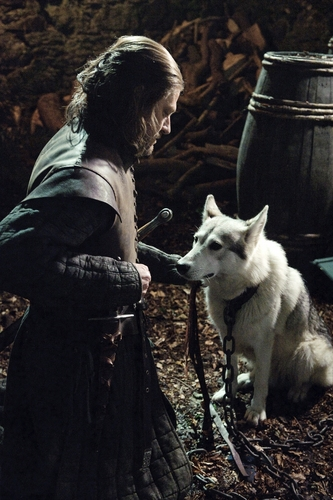 Ned & Lady