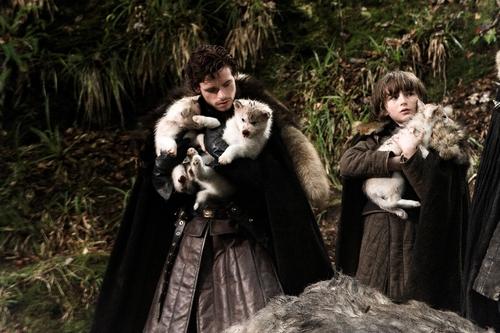 Robb, Bran & Direwolves