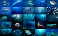 Sea Life - sea-life wallpaper