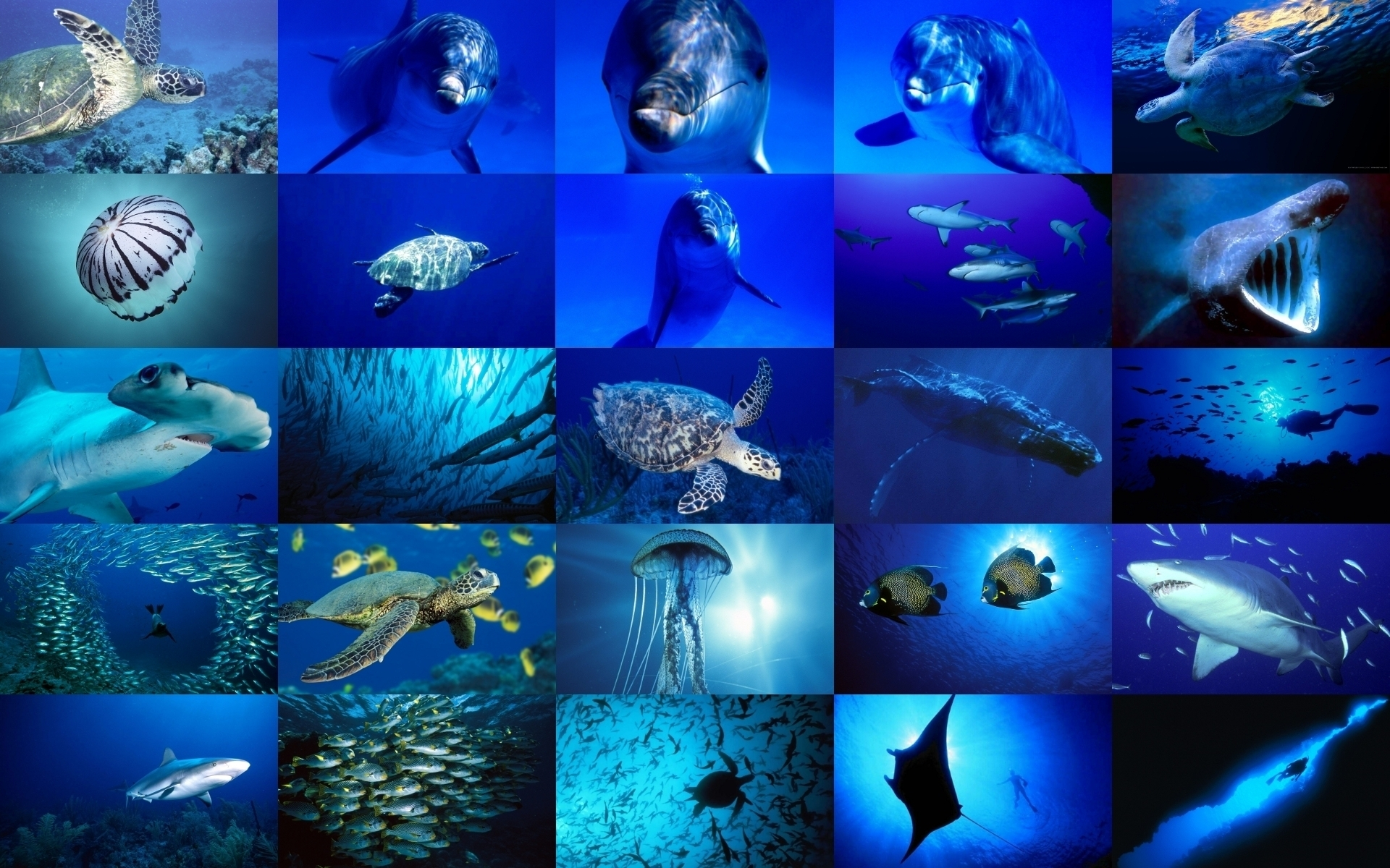 Sea Life images Sea Life HD wallpaper and background ...
